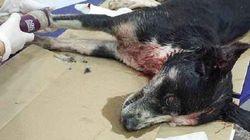 La Guardia Civil pide ayuda para dar con un maltratador de perros en