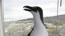 No hay pingüinos en el