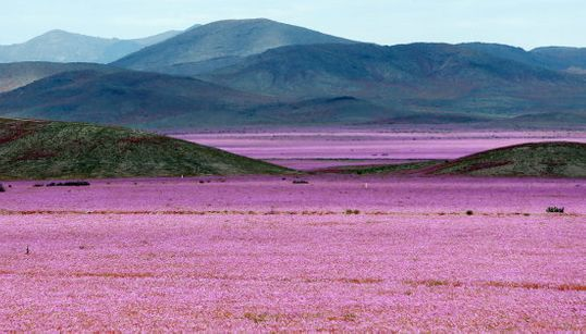 Así ha dejado El Niño el desierto más seco del mundo