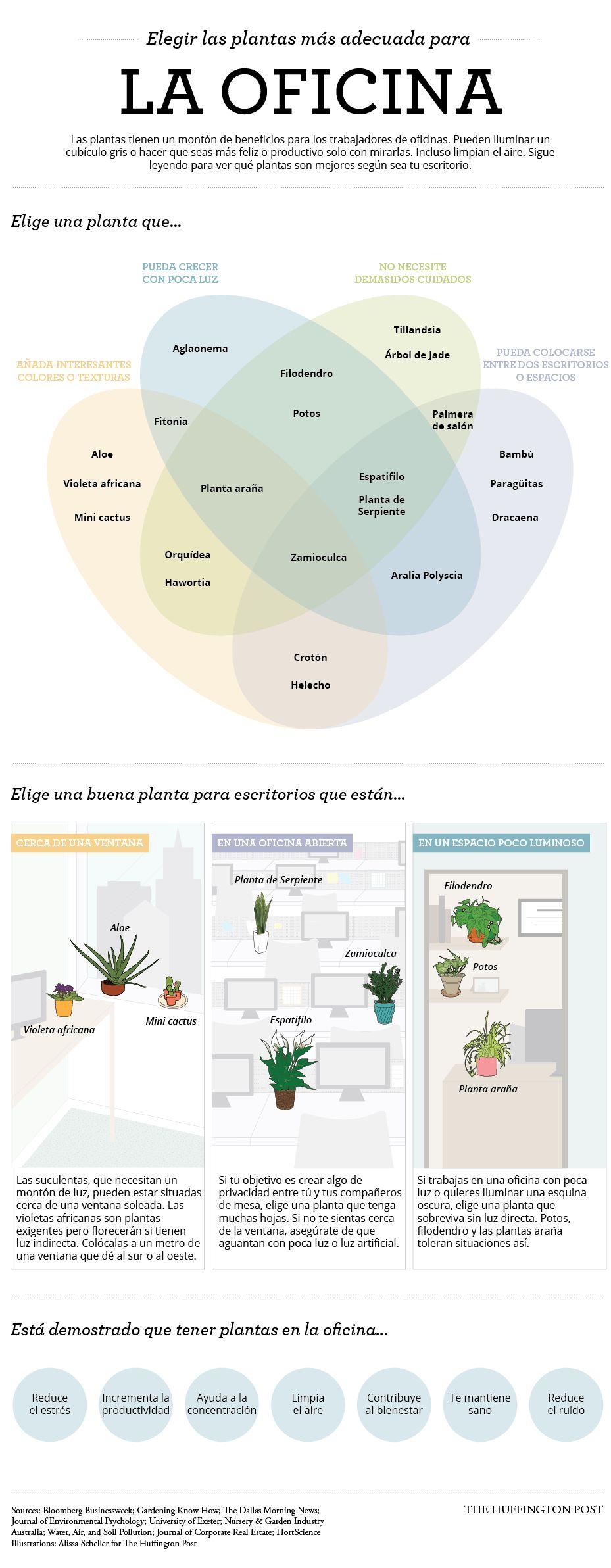 Decorar tu escritorio con plantas mejora tu productividad