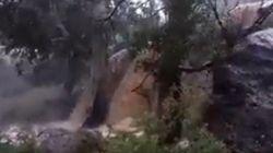 Está grabando las lluvias en Murcia cuando un árbol le cae