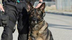 Registro con perros antidroga en un instituto de Madrid sin aviso a los