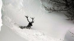 Lluvia, frío, nieve y hasta aludes para este fin de