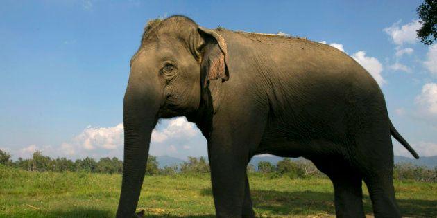 Dos elefantes se salvan de morir congelados en Rusia bebiendo