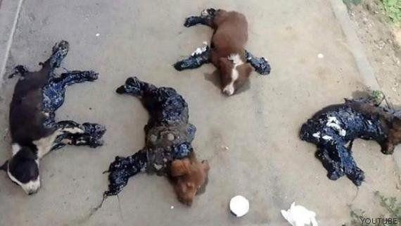 Bañan en alquitrán a cuatro perros para que se queden pegados al