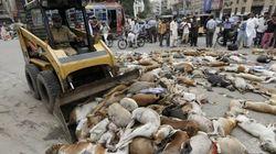 Polémica medida de una ciudad paquistaní contra los perros