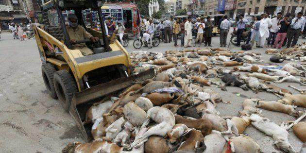 Envenenados 700 perros callejeros en