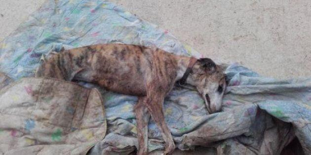 Brutal asalto a un refugio para perros en