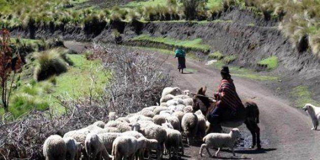 ¡Frutales en los Andes! El cambio climático en