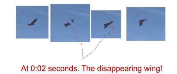 Vídeo de águila atrapando a un niño: razones para no creerse el viral del día (VÍDEO,