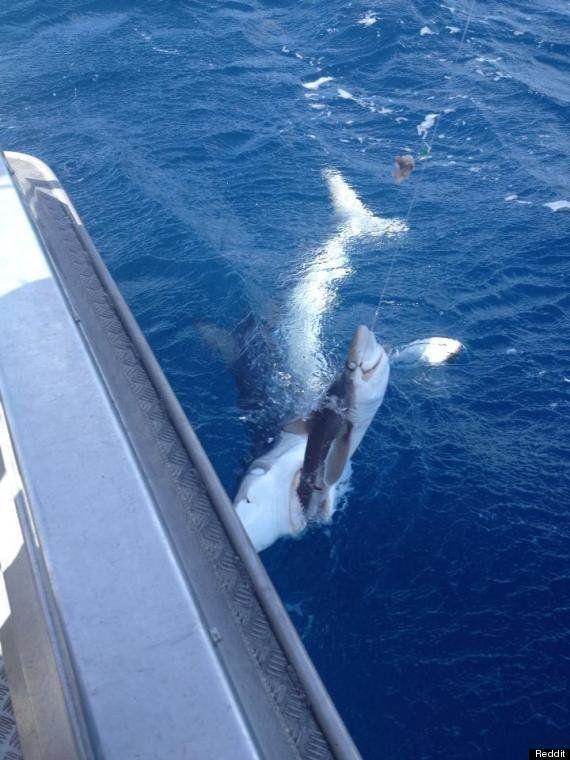 La foto de la lucha entre un pescador y un tiburón por una presa se hace viral