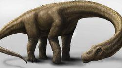 El dinosaurio más grande del mundo, descubierto en la