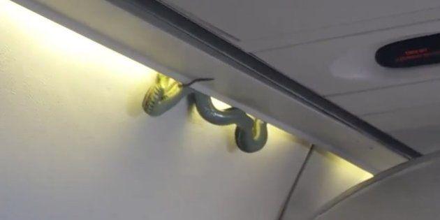 Encuentran una serpiente a bordo de un avión en pleno vuelo en