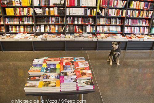 Ocio con perro: arte, libros, bicis ¡hasta