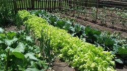 Solares gratis para plantar huertos