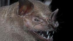 Las nuevas especies descubiertas en las selvas de Surinam
