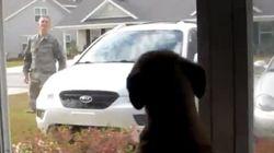 ¿El perro más feliz del mundo?