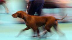 Running con perros: consejos para lograr la carrera