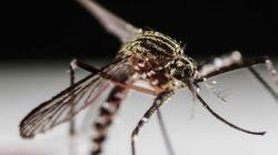 La OMS declara el virus del zika emergencia