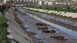 Hallados 80 cadáveres en un río de