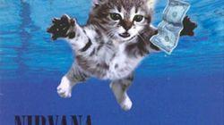 Gatos reinventando portadas de discos