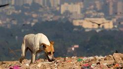 Investigan piensos hechos con restos de animales