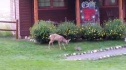 Bambi, Tambor, ¿sois