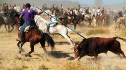 Castilla y León deniega a Tordesillas el permiso para celebrar el Toro de la