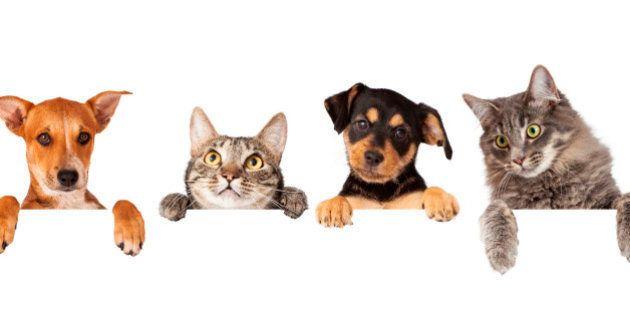 ¿Es un gato o un perro? El bichino que intriga a