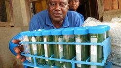 Spirulina, el alga espacial que combate la malnutrición en