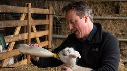 El supuesto encuentro sexual de Cameron con un cerdo enciende a Reino