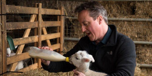 Piggate: polémica en Reino Unido por el supuesto encuentro sexual de Cameron con un