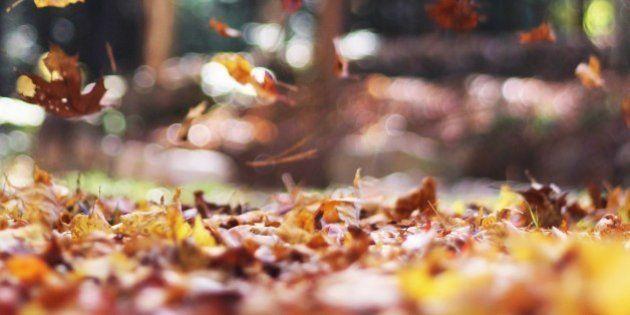 ¡El otoño ya está aquí! ¿Qué es lo mejor para ti de esta estación?