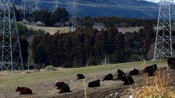 Japón quiere que Fukushima sea sede de los Juegos Olímpicos