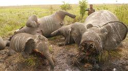 Niños y elefantes, sin derecho a la vida ni a la