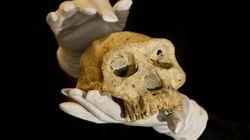 Este cráneo cuestiona la teoría evolutiva de los humanos