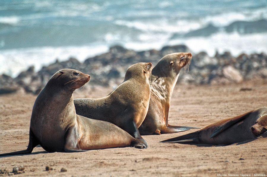 Saca tu lado más salvaje: 8 rincones para conectar con la naturaleza