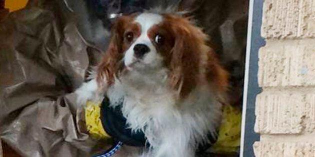 El perro de la enfermera contagiada de ébola en EEUU será sometido a pruebas para ver si está