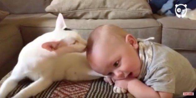 El enternecedor vídeo que muestra cómo acepta un bebé a un gato recién