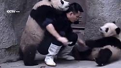 Nadie dijo que ser cuidador de un zoo fuese fácil