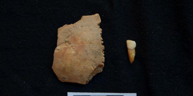 Hallan el diente y el parietal de un niño neandertal en Moià
