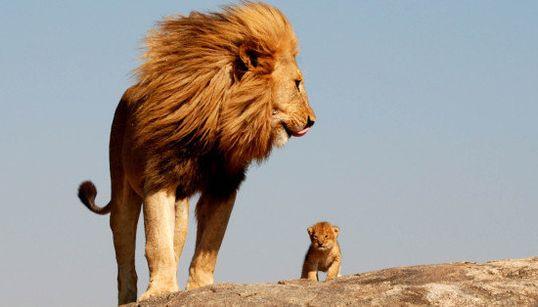 Simba y Mufasa en la vida real