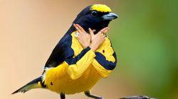 Pájaros con brazos humanos, la moda en Internet