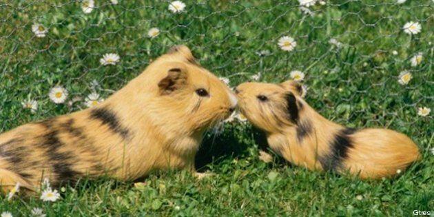 Los animales de la semana: bichinos con sus madres