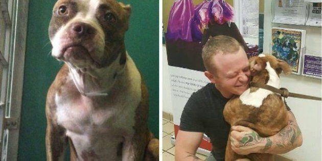 Un hombre recorre más de 5.000 kilómetros para adoptar a una perrita de un
