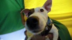 Las protectoras españolas recogieron más de 137.000 perros y gatos en