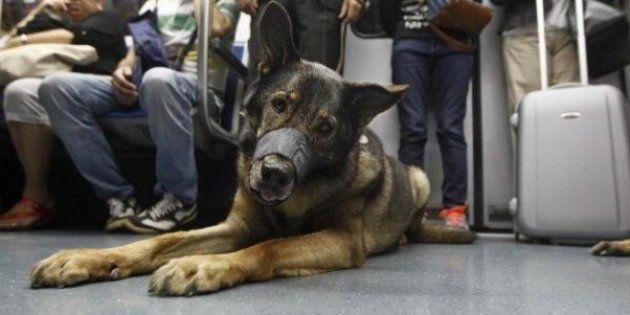 Los perros podrán viajar en el metro de Madrid: estos son los