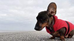 Bichinos con frío entre las 16 mejores fotos del