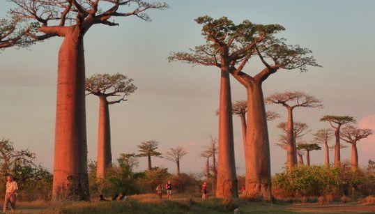 Los 10 bosques más mágicos del mundo