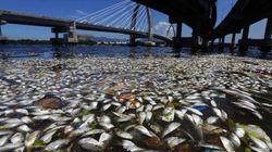 Agua muerta, un puente imaginario y otras fotos de la